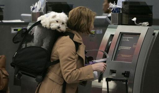 Precios de llevar un perro en avión en Colombia