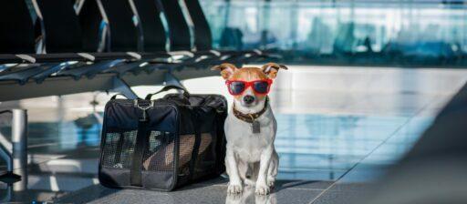Qué se necesita para viajar con mascotas en Colombia