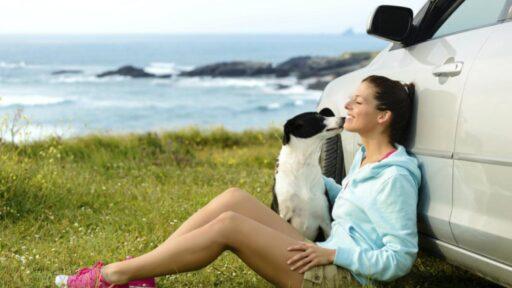 Requisitos para viajar con mascotas en Colombia