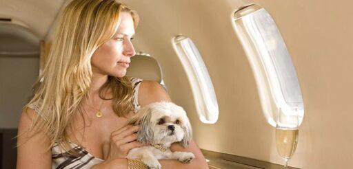 Viajar internacionalmente con mascotas